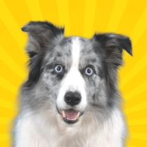 Real Pets™ by Fruwee 249 APK Download
