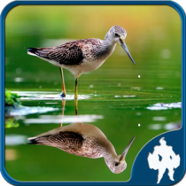Reflection Jigsaw Puzzles 1.9.17APK Download