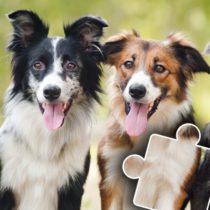 Dogs & Cats Puzzles for kids & toddlers 🐱🐩 🐾 2021.89 APK Download