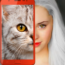 Kittens: what cat are you? prank 2.7 APK MODs (Unlimited Money) Download